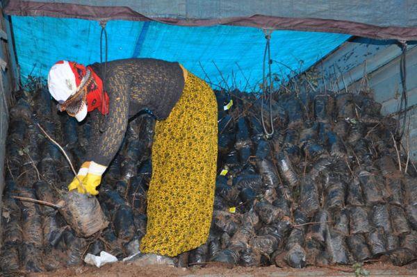 Çiftçilere 225 bin Antepfıstığı fidanı dağıtıldı