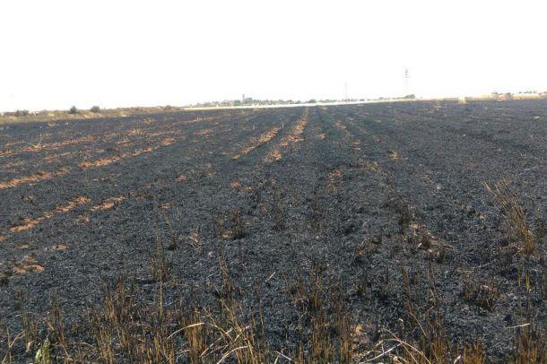 Şanlıurfa'da 190 dönüm tarla kül oldu