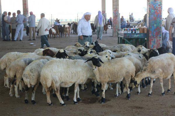 Türkiye`de hayvancılık sektörü dengesiz işliyor