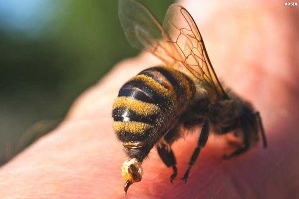 Arıların soktuğu adam hayatını kaybetti