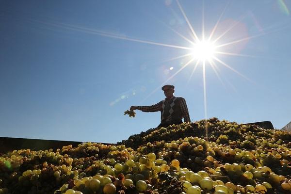 Enflasyonun Sorumlusu Çiftçi Değil!