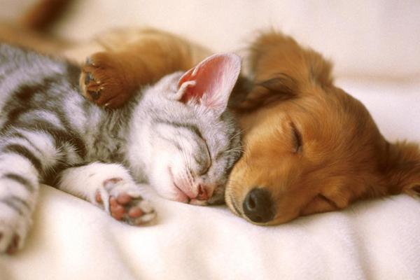 Evcil hayvanın çocuk sağlığına etkisi