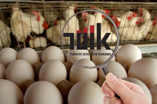 Tavuk ve yumurta üretimi istatistikleri açıklandı