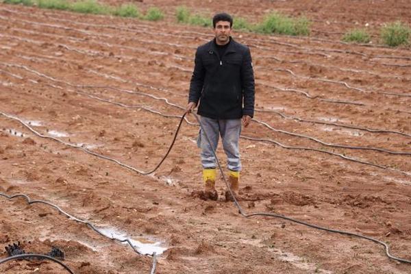 Sağanak ve dolu tarım alanlarını vurdu
