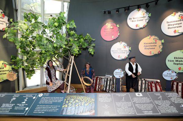 Fıstığın anavatanında 'Antep Fıstığı' müzesi açılacak
