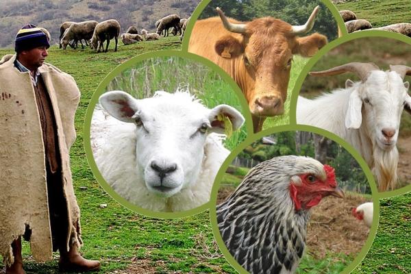Türkiye'deki hayvan sayısı açıklandı