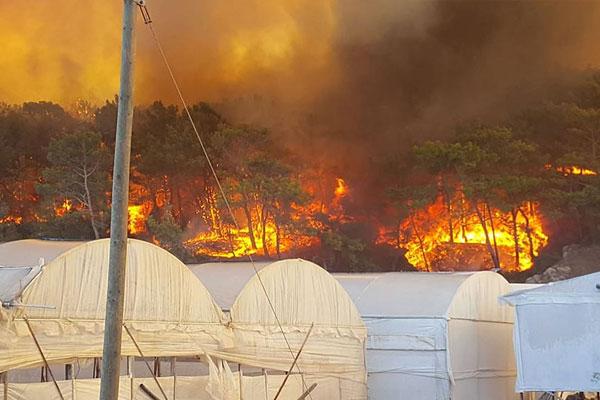Antalya`da orman yangını (1)