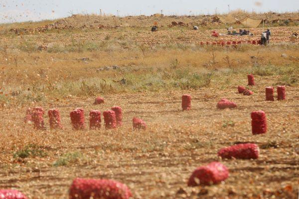 Çiftçiler: Kaçak elektrik kullanmayanlar kullananlardan etkileniyor