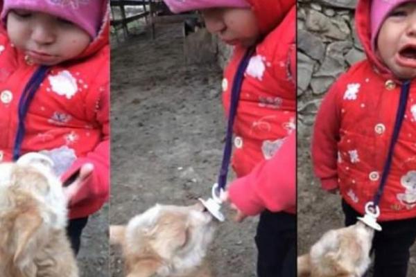 Ağrı`da bebek ile keçi yavrusu gülümsetti