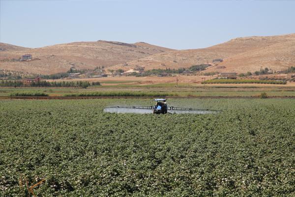 'Tarımsal ilaçlardan kaynaklı alerjik astım şikayetleri artıyor'