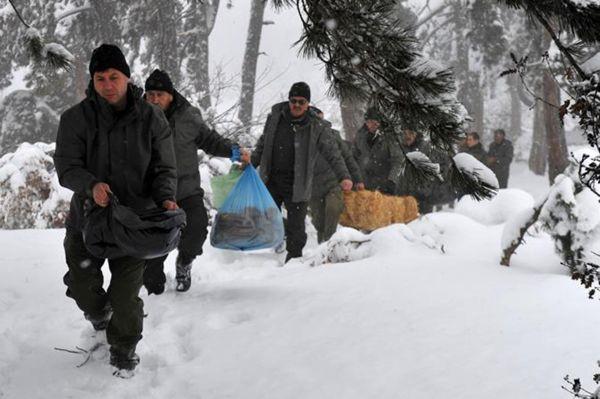 Yoğun kar ve dondan etkilenen yaban hayvanlarını yemleme çalışması
