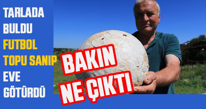 Futbol topu sandı, 5 kiloluk mantar çıktı!
