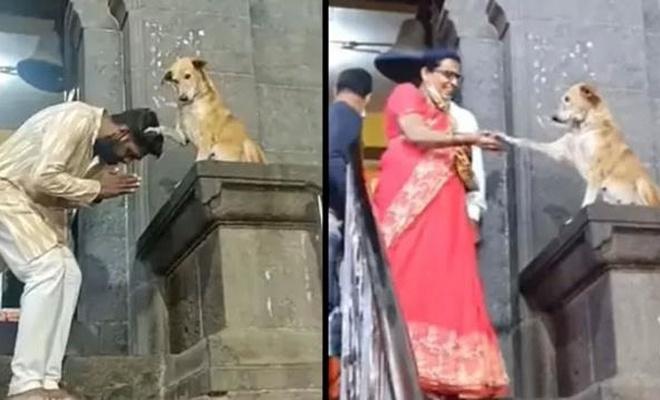 Hindistan'da tapınaktan çıkanlar sokak köpeği tarafından kutsandı