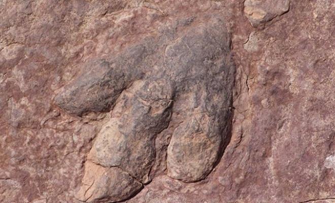 11 milyon yıllık dinozor fosili bulundu!