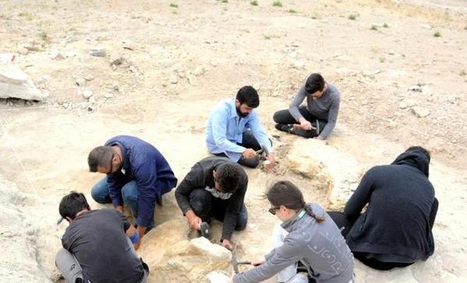 Kayseri'de aralarında 7,5 milyon yıllık fil fosilinin de yer aldığı 280 fosil çıkarıldı!