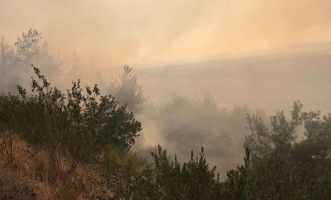 Adana'da çıkan yangın kontrol altına alındı