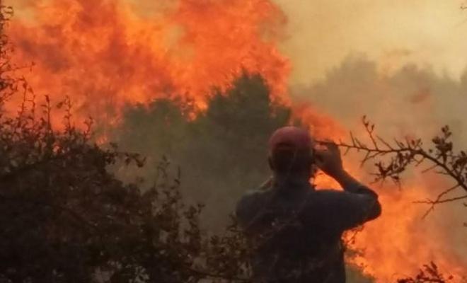 Edirne`de orman yangını