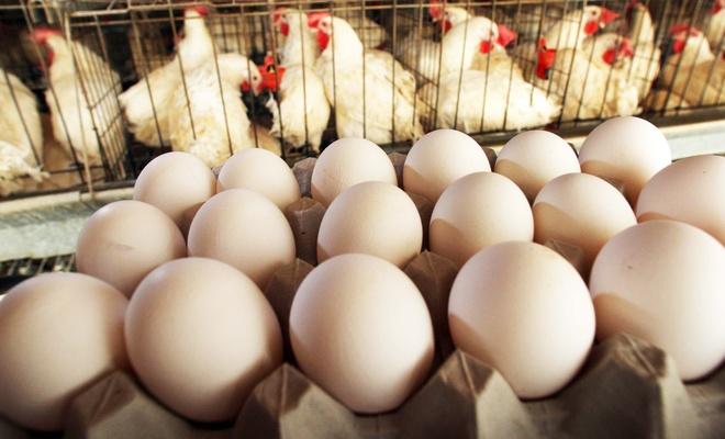 Yumurta fiyatları yükselirken üreticiler ne diyor