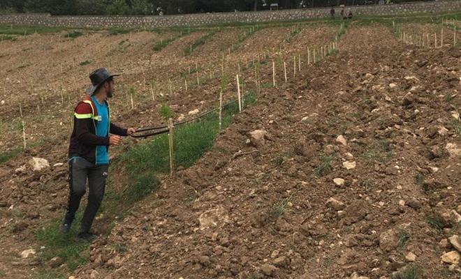 Adıyaman'da kadın çiftçilere yönelik badem bahçeleri tesis edildi