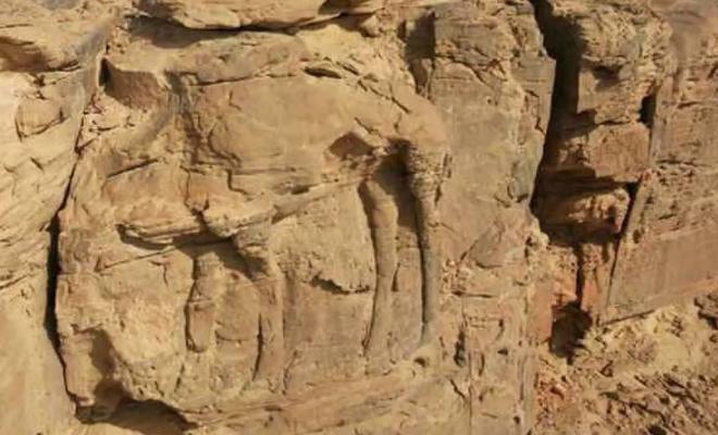 8.000 yıl önce kayalara mükemmel deve figürleri çizmişler