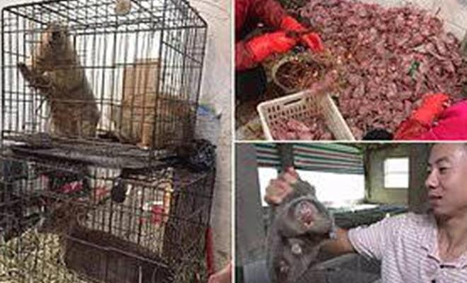 Çin, yeni tip koronavirüs dolayısıyla yabani hayvan ticaretini yasakladı