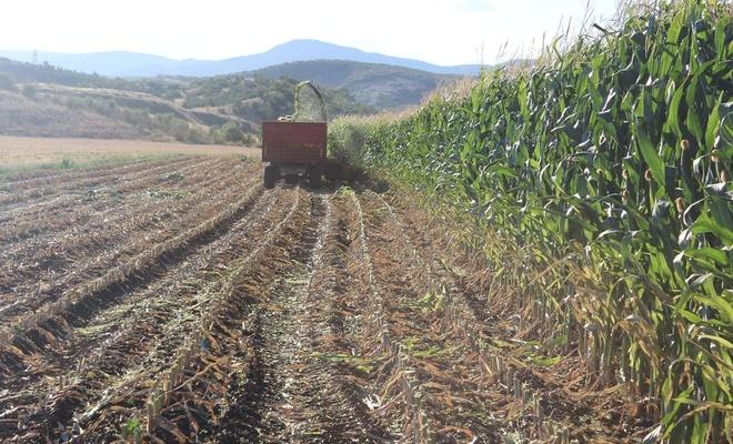 Bingöl'de mısır üreticileri artan maliyetlerden şikayetçi