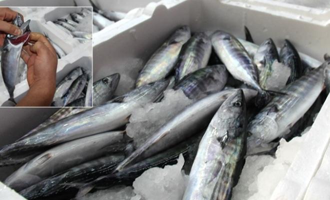 Rize'de tekneler, kasalar dolusu palamutla döndü