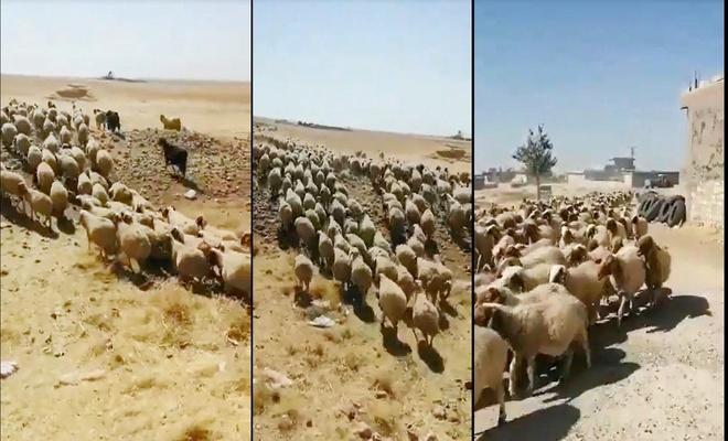 Elektrikleri kesildiği için susuz kalan köylülerin hayvanları telef olmak üzere
