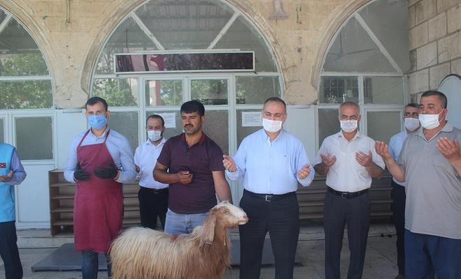 Adıyaman'da camilerin açılışı dolayısıyla şükür kurbanı kesildi
