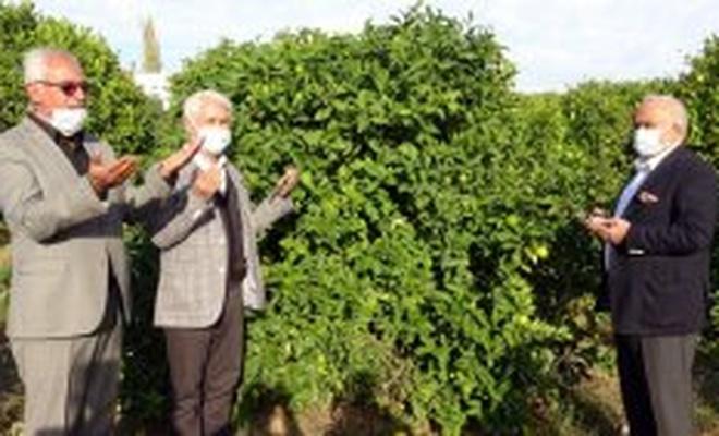 Mersin'de Lamas limonu hasadı bereket duaları ile başladı