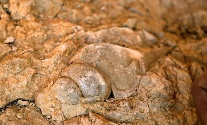 Elazığ'ın yüksek dağlarında deniz canlılarının fosilleri bulundu