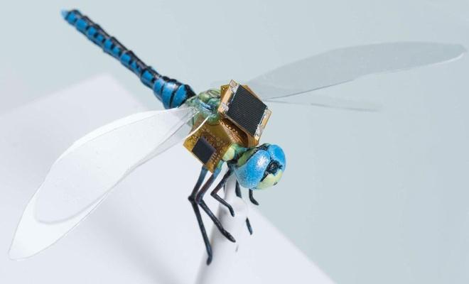 Geleceğin drone tasarımlarına ilham veren böcek; Yusufçuk