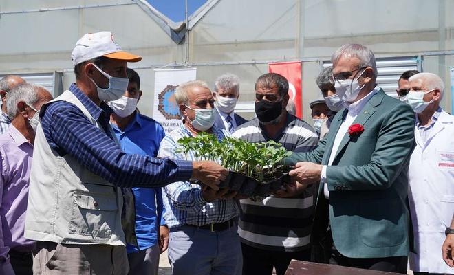 Üreticilere 5 bin Diyarbakır Karpuzu fidesi dağıtıldı