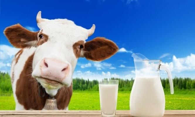 Çiğ süt fiyatına yüksek zam talebi!