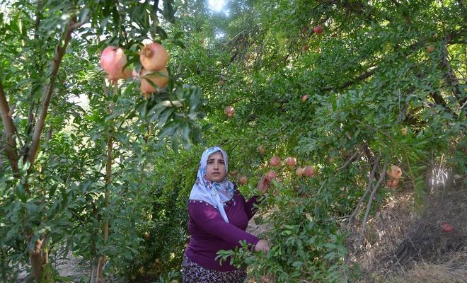 'Nar Lokumu' projesi ile Türkiye ikincisi oldu