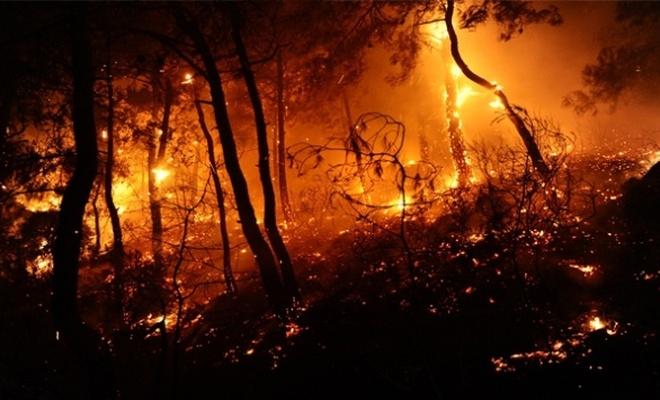 Gezi Kafalılar Pkk'nin Yaktırdığı Ormanlar İçin Ne Diyecek?