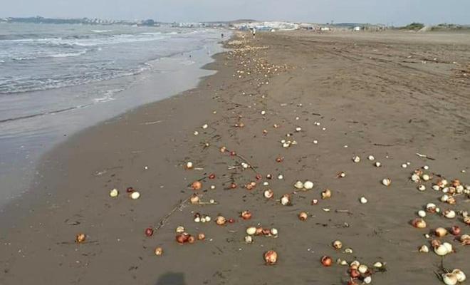 Adana'da yüzlerce kilo soğan sahile vurdu