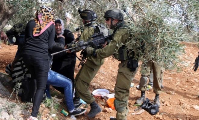 Siyonist işgal rejimi, Filistinlilerin zeytin bahçelerine girmesini engelleyen karar çıkardı