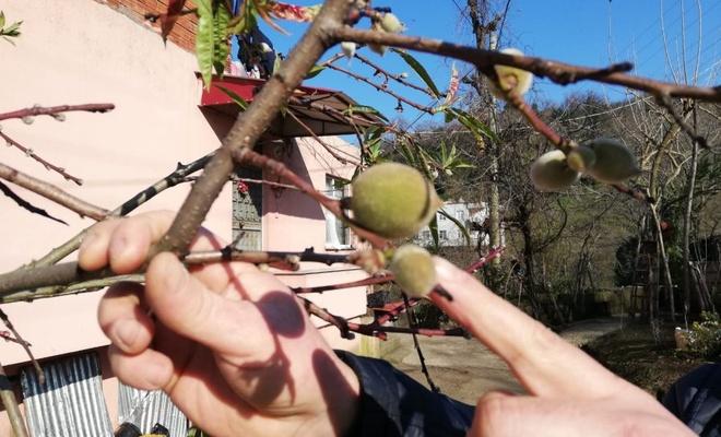 Mevsimler meyveleri, meyveler vatandaşı şaşırttı ile ilgili görsel sonucu