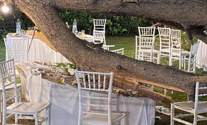 Antalya'da düğün sırasında ağaç devrildi: 10 yaralı