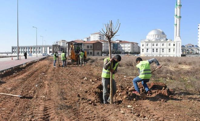 Gaziantep'te milyonlarca fidan toprakla buluştu