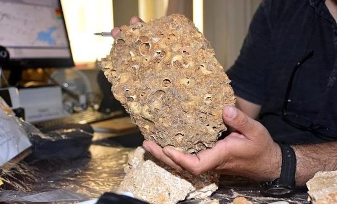 Muş'ta 50 milyon yıllık fosiller bulundu