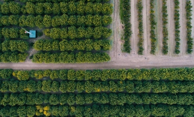 Çiftçilere 374 milyon lira destek ödemesi