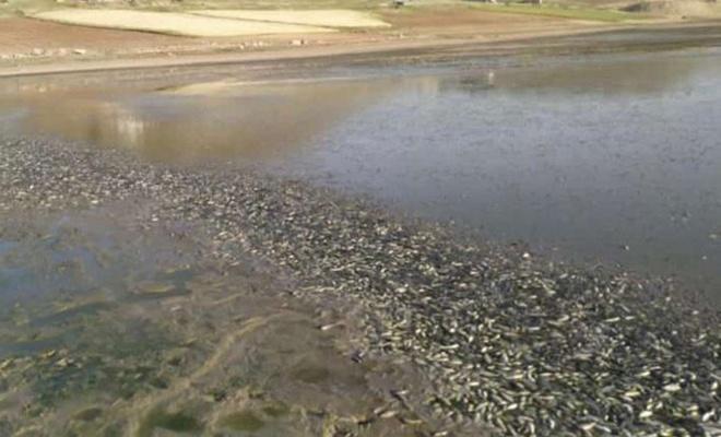 Mardin'de kuraklıktan suyu kuruyan göletteki binlerce balık telef oldu