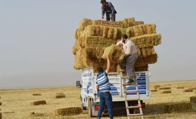 Kuraklığın da etkisiyle saman fiyatları ikiye katlandı