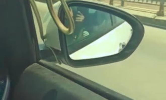 Araba camındaki 2 metre yılanla korkutan yolculuk