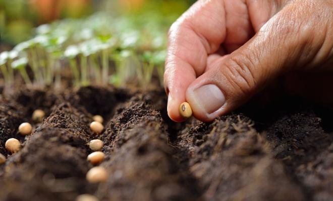 Sertifikalı tohum %25 verimi artırıyor