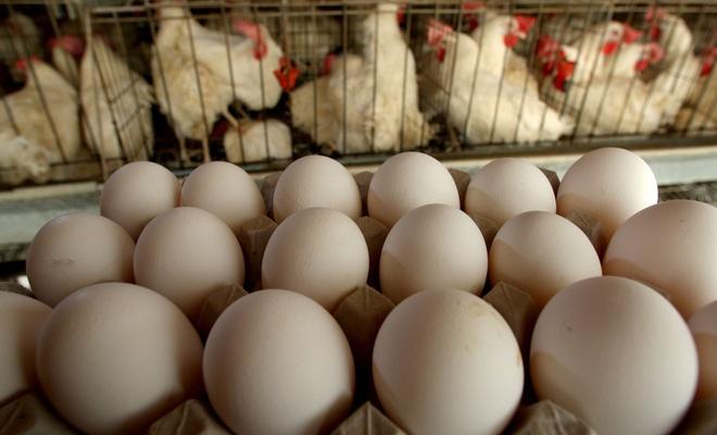 Yumurta fiyatları 1 ylda 2 katına çıktı!