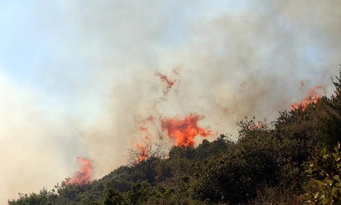 Hatay`da orman yangını