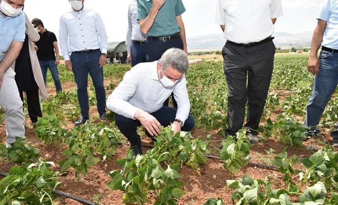 Malatya Valisi Baruş tarımsal üretim sahası ve seralarda incelemelerde bulundu